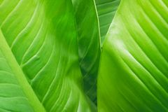 Green leaf background. Green leaf background Royalty Free Stock Images