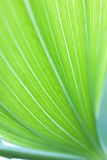 Green leaf background. Green leaf macro shot.Shallow depth of field Royalty Free Stock Images