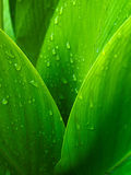 Green leaf background. Abstract of nature Stock Images
