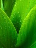 Green Leaf Background Stock Images