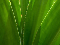 Green leaf background. Abstract of nature Stock Photography