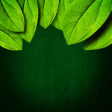 Green leaf background. In dark concept with copy space stock illustration