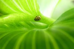 Green leaf background Stock Photos