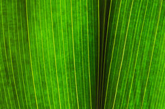 Green leaf background Stock Photo