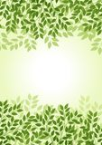 Green leaf background Royalty Free Stock Image