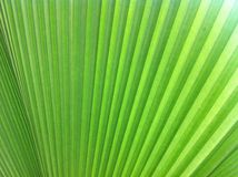 Green leaf. Background royalty free stock image
