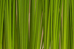 Green leaf background abstract. Close up texture Royalty Free Stock Image