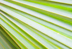 Green leaf background. Green leaf as background in line pattern Royalty Free Stock Photo