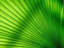 Green leaf background Stock Image