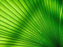 Green leaf background. Beautiful green leaf background Stock Image