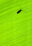 Green leaf background with a bug Stock Photography