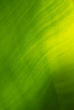 Green leaf background. Royalty Free Stock Image
