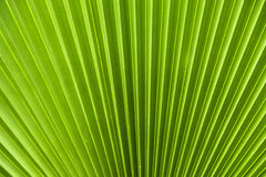 Green leaf background. Close up of green leaf background texture Stock Images