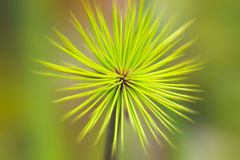 Green leaf background. Closeup of green leaf background,blur Royalty Free Stock Photo
