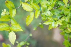 Green leaf background and copy space. Plants leaf background Stock Photos