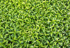 Green leaf background. For design and decoration Royalty Free Stock Images