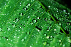 Green leaf background with dew Stock Images