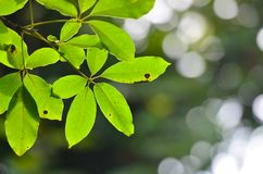 Green leaf background. Royalty Free Stock Images