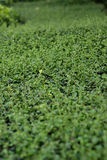 Green leaf background. perspective, selective focus Stock Images