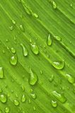 Green leaf background with raindrops Royalty Free Stock Images