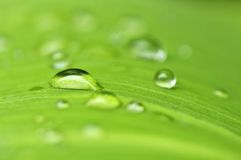 Green leaf background with raindrops Stock Image