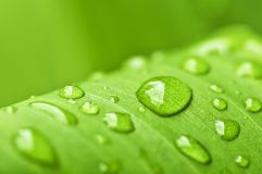 Green leaf background with raindrops Royalty Free Stock Image