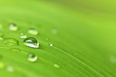 Green leaf background with raindrops. Natural background of green plant leaf with raindrops Stock Images