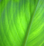 Green leaf background Stock Images