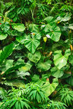 Green leaf background. From the small jungle Royalty Free Stock Image