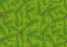 Green leaf background. Royalty Free Stock Photos