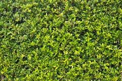 Green leaf background Stock Image