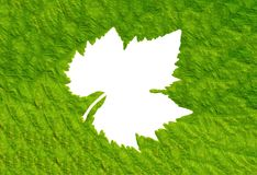 Green leaf background texture, macro Royalty Free Stock Image