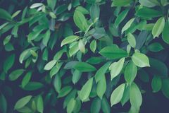 Green leaf background. nature background royalty free stock photos