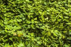 Green leaf background Stock Photo