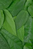 Green leaf. Background and textured Royalty Free Stock Photo