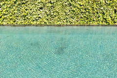 Green leaf background vine wall with Green swimming pool rippled Royalty Free Stock Images