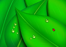 Green Leaf Background with Water Drops Stock Photos