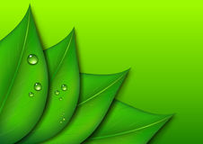 Green Leaf Background with Water Drops on Green Gradient backgro Royalty Free Stock Images