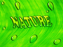 Green leaf background with water inscription ''NATURE'' Stock Images