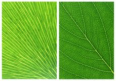 Green leaf backgrounds patterns Stock Photography