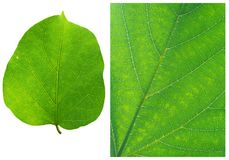 Green leaf backgrounds patterns Royalty Free Stock Photos