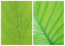Green leaf backgrounds patterns Stock Photo