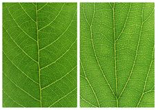 Green leaf backgrounds patterns Royalty Free Stock Images