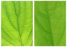 Green leaf backgrounds patterns Stock Images