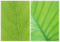 Green leaf backgrounds patterns Stock Image