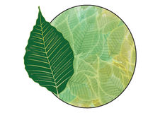 Green leaf badge Royalty Free Stock Photography