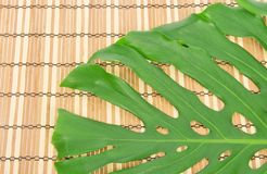 Green leaf on a bamboo napkin Stock Image