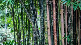 Green Leaf Bamboo Tree at Daytime Stock Image