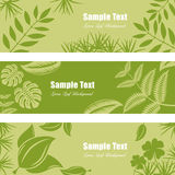 Green leaf banner set Stock Photos