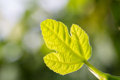 Green leaf banner Royalty Free Stock Photo